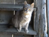 unsere Katze Mini