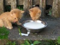 Ach ist so ein Katzenleben schön!