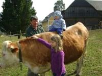 Eine Kuh zum Anfassen