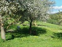 Obstgarten mit Pony und Esel