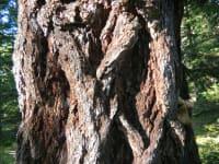 Zopfmuster Naturgewachsen