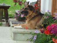 Unser Hofhund