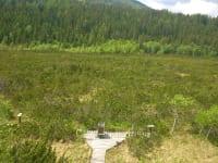 Dürnberger Moor