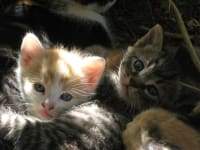 Katzennachwuchs