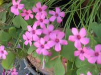 Blumen im Hof und Garten