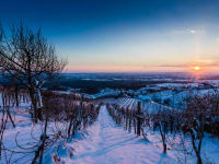 Winterlandschaft -Weinberge