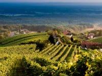 Aussicht Weinwanderweg