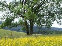 Naturpark Almenland vor unserem Haus