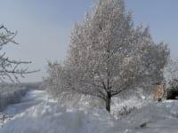 Unsere Linde im Winterkleid