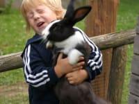 So ein großes Kaninchen!