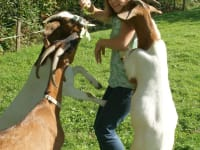 Die mit den Ziegen tanzt ...