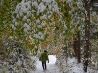 Spaziergänge im Winterwald