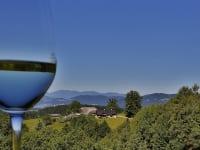 Blick durchs Weinglas