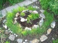 Kräuter im Hausgarten