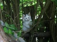 viele Katzen sind auf unserem Hof