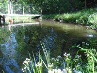 Fischteich mit Forellen
