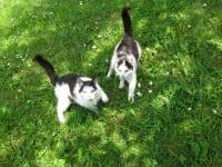 Unsere verspieloten Katzen