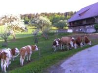 Sie machen Urlaub auf einem echten lebendigen Bauernhof