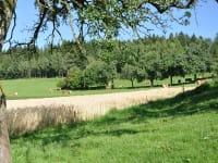 Unsere Kühe im Sommer auf der Weide