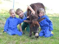 Kinder Tiere Bauernhof
