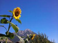 Die Kraft der Sonnenblume