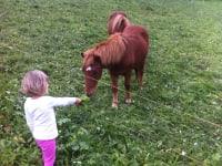 Ponys auf der Alm...