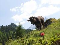 Natur pur in den Bergen