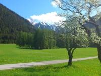 Blühende Zwetschkenbäume