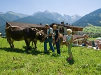 Kühe am Ladestatthof