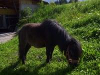 Unser Pony Navaro