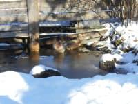 unsere Laufenten im Winter