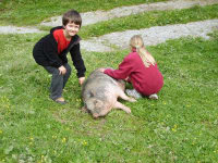 Kuscheltier H?ngebauchschwein