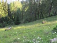 Gullenhütte Blumewiese unterhalb der Hütte