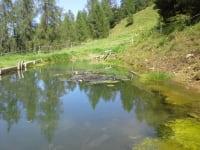 Gullenhütte Teich mit Forellen