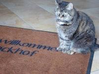 Unsere Katze - Pumu