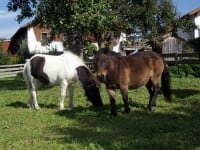 Unsere Ponies Lilli und Lord