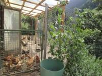 die Hühner kannst du von der Wohnung aus beobachten.