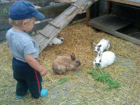 Johannes and his rabbits