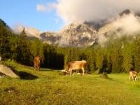 Alpine life in the Schlickertal