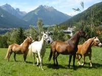 Auch unsere Pferde fühlen sich auf dem >Kassnhof< sehr wohl!