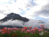 Blumen-Berge-Sonne- und eine phantastische Aussicht auf die Gletscher des Stubaitales