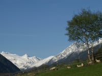 At 3507 m, the Zuckerhütl is the highest mountain in the Stubaier Alps (together with the Sulzenauferner)