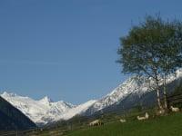 Zuckerhütl mit 3507 m der höchste Berg der Stubaier Alpen mit Sulzenauferner