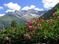 Blick von Balkon auf die Zillertaler Alpen