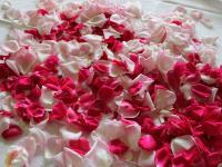 Vorbereitung zum Rosensirup