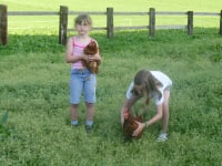 Hühner als Spielgefährten