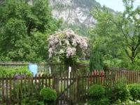 Im Hausgarten