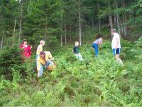Pilzesammeln im eigenen Wald