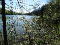 Frühling am Rheintaler See