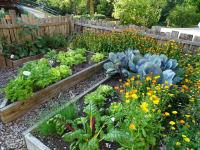 Frisches Gemüse aus dem hauseigenen Garten
